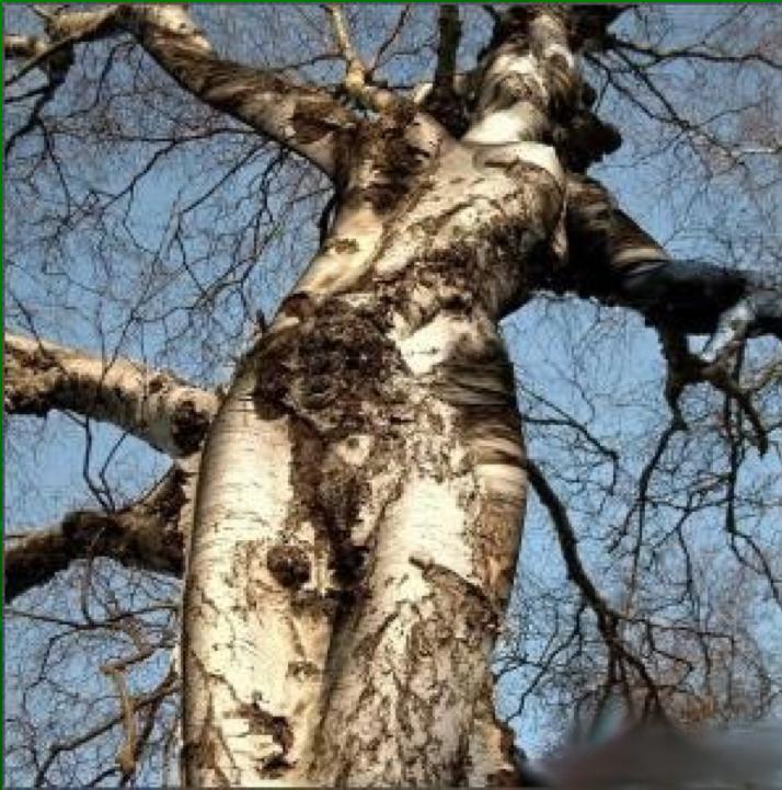 arbre02.png